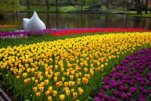 Khám Phá Lễ Hội Hoa Tulip Tuyệt Đẹp Tại  Keukenhof, Amsterdam, Hà Lan