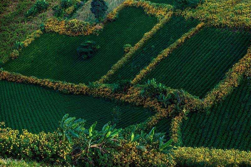 Tour Du Lịch Pleiku Trong Ngày: Hồ Tơ Nưng – Thủy điện Ialy – Chùa Cổ Minh thành – Công Viên Đồng Xanh