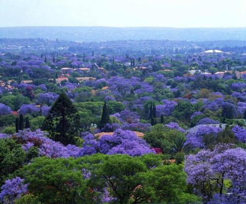 Tour Du Lịch Nam Phi Mùa Phượng Tím: Cape Town - Johannesburg - Sun City - Pretoria - Johannesburg