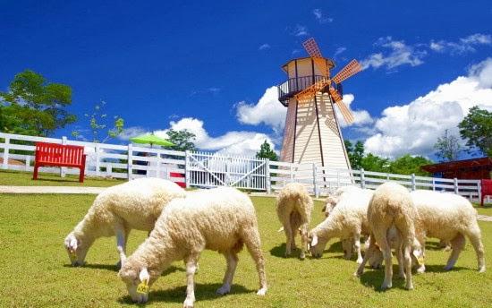 Nông trại cừu - Du lịch Thái Lan