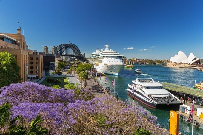 Sydney mùa hoa phượng tím