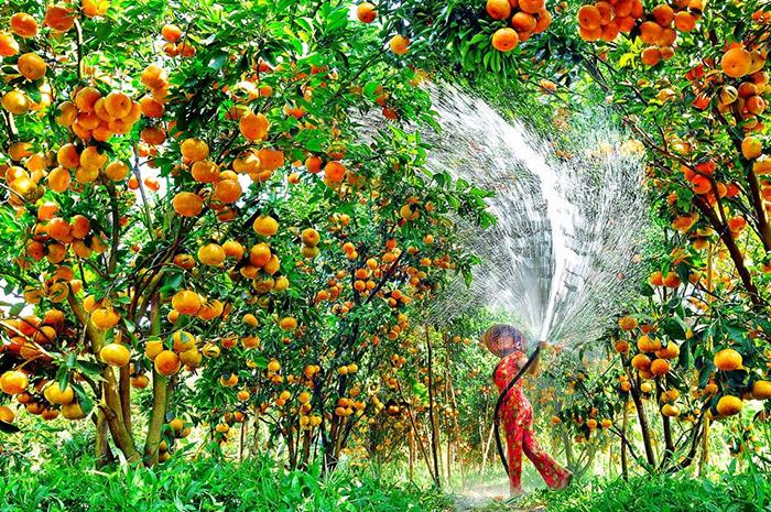 Vườn trái cây Cái Bè, Tiền Giang