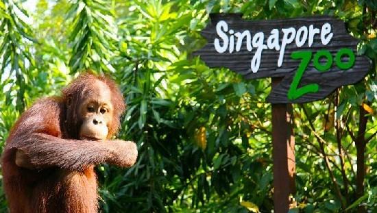 Sở thú Singapore (Singapore Zoo)