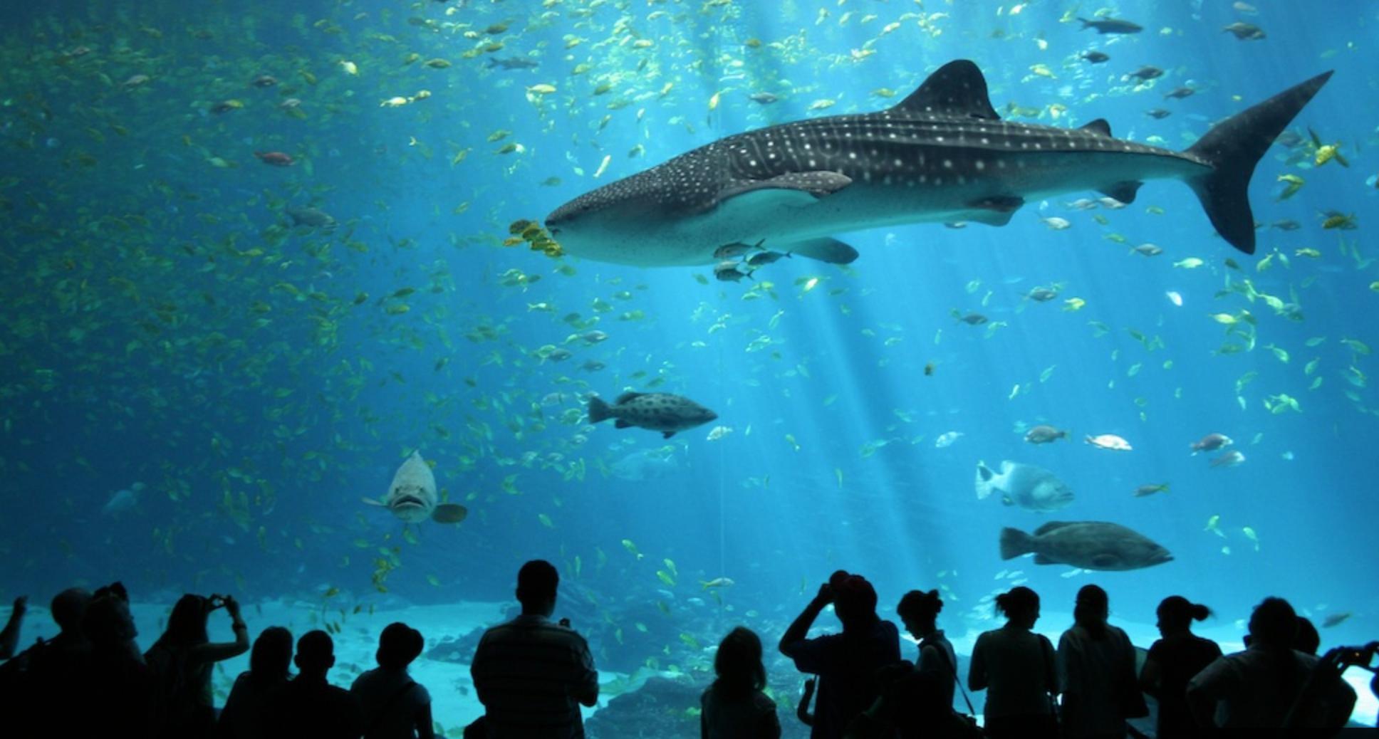 Du lịch Singapore tết dương lịch 2016 - sea aquarium