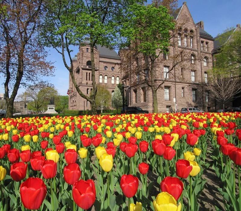 Mùa xuân ở Canada ngập tràn sắc hoa