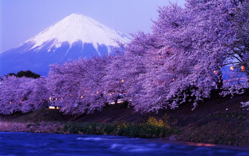 Núi phú Sĩ mùa hoa anh đào