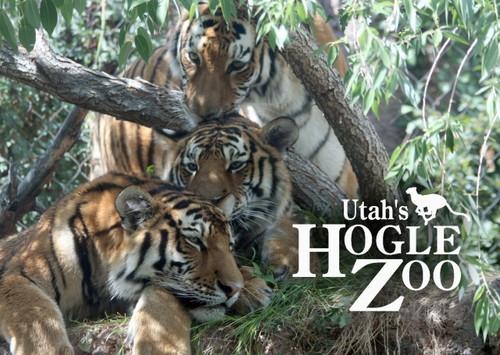 utah hogle zoo