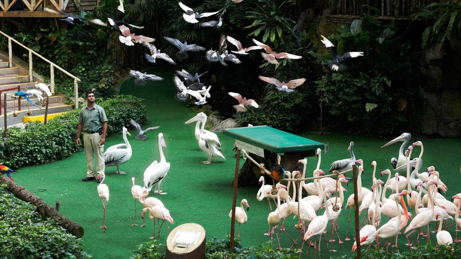 Vườn chim Jurong với nhiều loài động vật quý hiếm